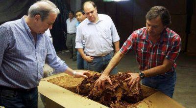 Luego de muchos años Tucumán comenzará a producir tabaco Virginia