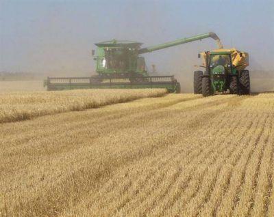 Destacan el buen momento del cultivo de trigo en la provincia