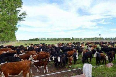 IMPORTANTE RECONOCIMIENTO PARA PRODUCTORES AGROPECUARIOS DE BRAGADO POR UN PROYECTO GANADERO
