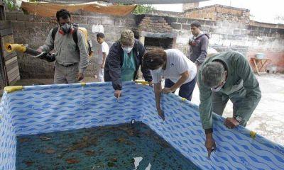 Contra el dengue: arranca mañana un nuevo monitoreo aédico