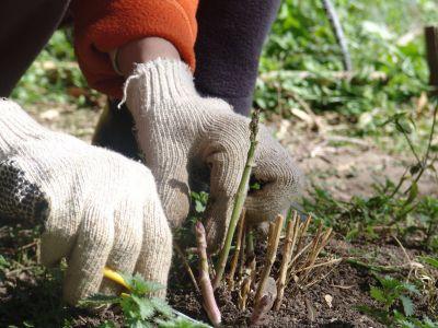 Se sigue fomentando la soberanía alimentaria en Presidente Perón