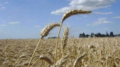 Proyectan que la cosecha de trigo va a ara�ar las 10 millones de toneladas