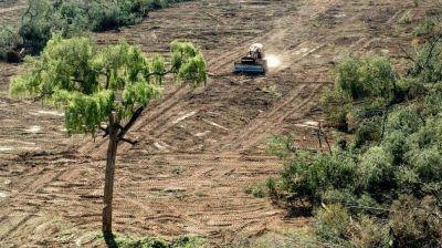 Tucumán recibe sólo una porción de lo que necesita para proteger sus bosques