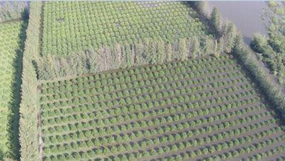 Desde el Sindicato de la Fruta minimizaron el impacto que tendrán las inundaciones sobre las fuentes laborales