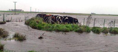 PRIMERA PLANA  Desde este lunes estará disponible la documentación para acceder a los beneficios de la emergencia agropecuaria