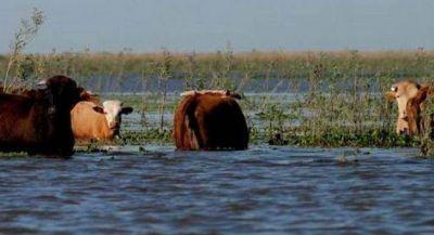 Exceso h�drico: las lluvias complican a�n m�s a productores de la provincia