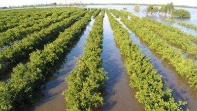 Habilitan una línea de crédito para productores afectados por inundaciones