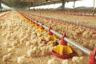 Los pequeños productores de La Cañada ya cuentan con un Módulo Avícola