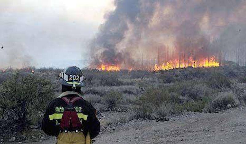 El fuego ya arras� 80 mil hect�reas en San Luis