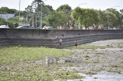 Desde Berisso y Ensenada piden a la población que no ingrese al Río por las culebras