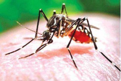 La Rioja está en alerta rojo por el posible caso positivo de dengue
