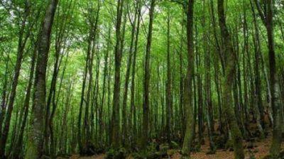 Fondos para proteger los bosques nativos