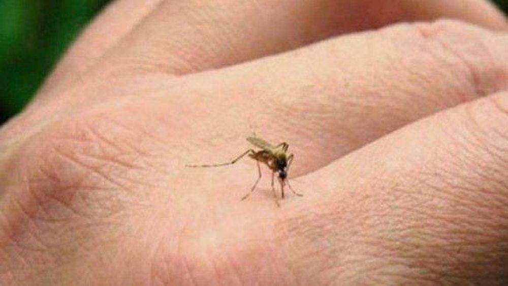 Preven fuerte brote de Zika en toda la región