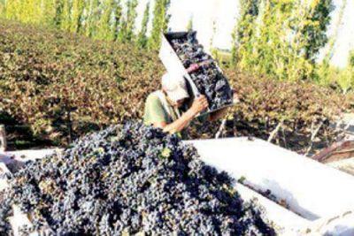 El INV estima una cosecha de uva menor a la de 2015