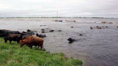 Avanza la declaración de emergencia agropecuaria para la provincia