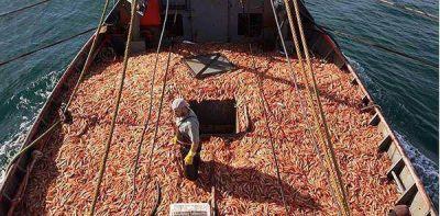 Provincia endurece los controles sobre puertos, pesqueras y tambi�n trabajadores