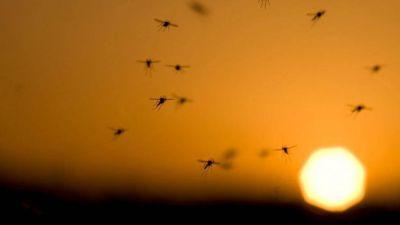 Bromatología realiza el monitoreo de la presencia del mosquito Aedes Aegypti, transmisor de distintas enfermedades como Dengue, Chikungunya y Zika