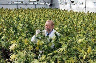 General La Madrid quiere narcotráfico cero y se prepara para producir cannabis