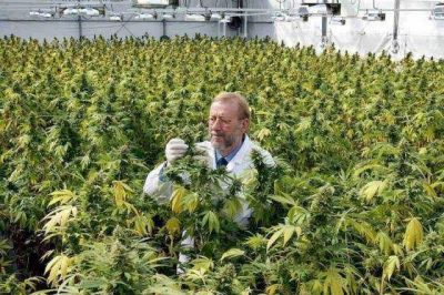 La Madrid quiere narcotr�fico cero y se prepara para producir cannabis