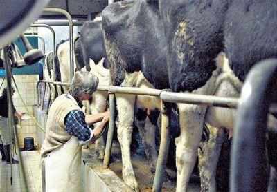 Santa Fe, Córdoba y Buenos Aires buscan una salida a la crisis lechera