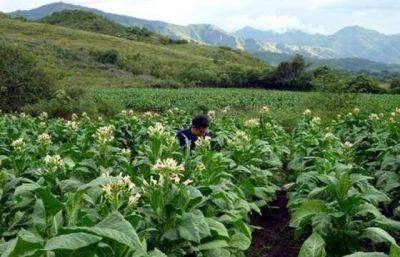 Hubo acuerdo por el precio del tabaco, con un incremento del 28%