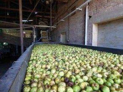 Optimismo en Andalgalá por la cosecha del membrillo