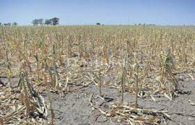Solicitan la emergencia agropecuaria para el este