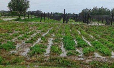 El temporal arrasó con la producción frutihortícola de Santa Fe