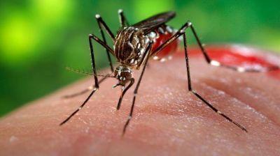 Confirmaron el primer caso aut�ctono de zika en Argentina