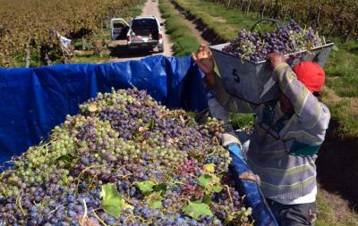 En 8 a�os, aument� la concentraci�n en la industria vitivin�cola