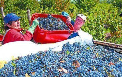 Impensado: ahora falta uva y aumenta el vino