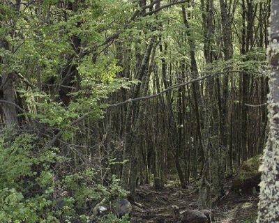 ACIERA celebra el Día Internacional de los Bosques y el Día Mundial del Agua