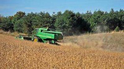 Se reduce el �rea de siembra de soja en el NOA y crece la del ma�z