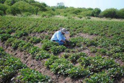 Piden se agilice el pago de subsidios a peque�os productores de Formosa
