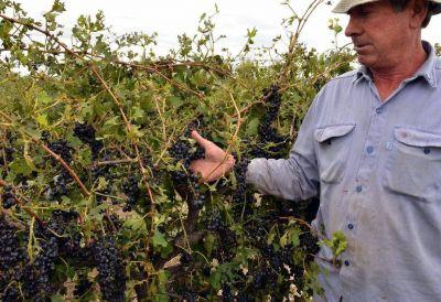 Nación declaró Emergencia Agropecuaria para Mendoza