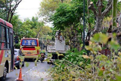 San Fernando realiza trabajos de poda correctiva