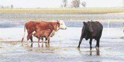 La Sociedad Rural de Formosa solicitó que se convoque al Comité Provincial de Emergencia Agropecuaria