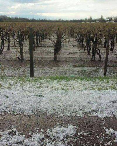 La Naci�n declar� la emergencia agropecuaria para distintas producciones en Mendoza