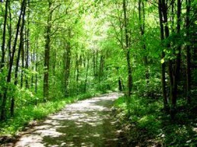 Secretar�a de Ambiente controla proyectos de Bosques Nativos