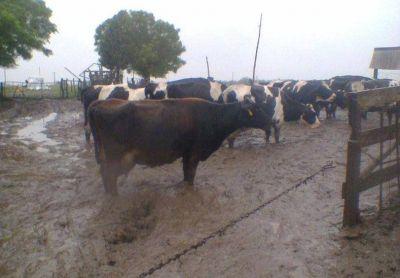 Debido a caminos intransitables los tamberos deben tirar la leche