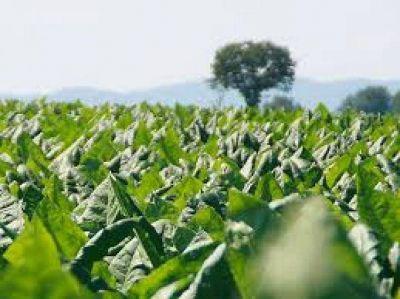 Senadores piden declarar la emergencia agropecuaria en siete departamentos
