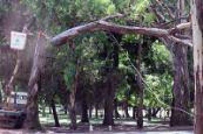 La Plata: Municipio busca instalar una planta de Tratamiento para la poda