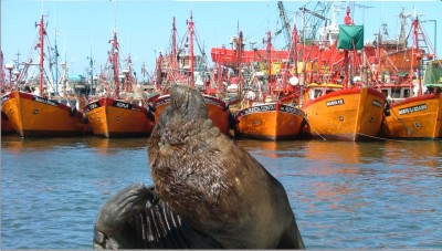 Los Patrones Pescadores cuestionan una resolución del Consejo Federal Pesquero