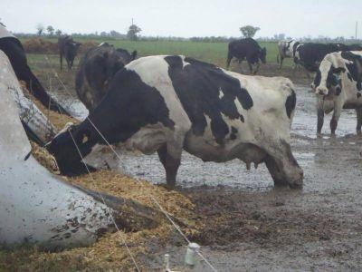 La crisis láctea en Santa Fe podría repercutir en las góndolas