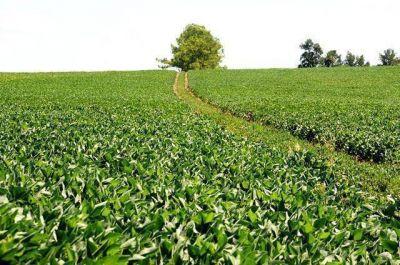 La soja dará pérdidas, según la Bolsa de Cereales