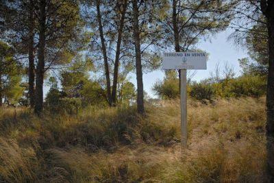La Municipalidad tiene 400 terrenos disponibles para la venta