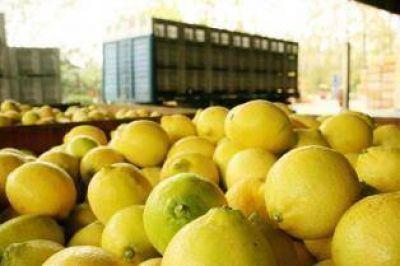 """""""Es un hito"""", dijo Buryaile sobre el anuncio por el limón"""