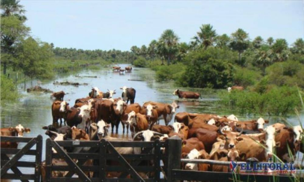 Ampliaron hasta noviembre la emergencia agropecuaria y siguen gestionando apoyo