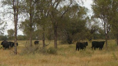 La Mesa de Enlace elevará una nueva propuesta para el manejo de bosques nativos