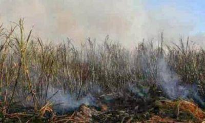 Medio Ambiente busca erradicar la quema de ca�a